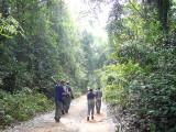 Forest track at Bobiri Reserve, Ghana