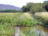 The Crom Mhin marsh and Gartfairn Wood, Loch Lomond NNR