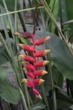 Flowers in hotel garden, São Tomé