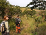Birding in the grassland tracks, Leconi, gabon