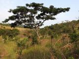Mixed grass and woodland, Leconi, gabon