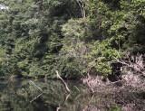 Mpivié River, Loango NP, Gabon
