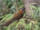 Bhutan Birds - General Gallery