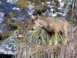 Bhutan - Mammals