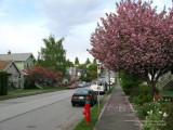 Triumph Street, East Vancouver