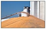 Offloading corn harvest
