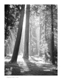 Sequoia N.P, CA