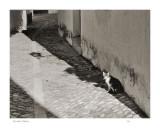 Cat in Spain 1991