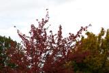 Fall Colors: Autumn '08
