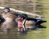 Mar 27 08 Critter Lake-8.jpg