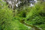 Beaver Marsh Nature Preserve, May 5 09