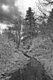 May 5 09 Beaver Swamp Park 5D-5-2.jpg