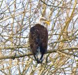 Feb 11 08 Vancouver Lake 1D-8.jpg
