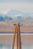 Feb 11 08 Vancouver Lake 1D-154.jpg