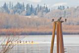 Feb 11 08 Vancouver Lake 1D-196.jpg