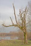 Feb 11 08 Vancouver Lake 5D-1.jpg