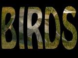 Birds Title Page.jpg