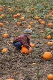 Pumped up about pumpkins