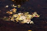 Autumn's Litter