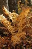 Woodland Fern-iture