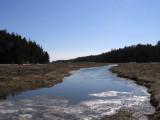 Bates-Morse Mountain Marsh #5909