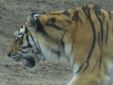 Philadelphia Zoo #6198_2