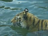 Philadelphia Zoo #6203