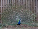 Philadelphia Zoo #6228_2
