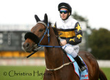 Caulfield racecourse, Melbourne 2010-09-18 (Underwood Stakes Day)