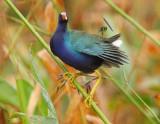 other_birds