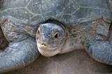 Turtle Lines