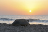 Sunrise at Ras Al Jinz