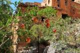 Pomegranites at Bani Habib