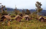Pig huts