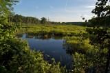 Marsh at Water row