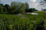 Pond on the Killerton estate