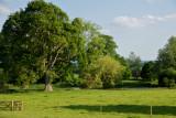 Killerton landscape
