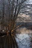 Backwater on the Sudbury river