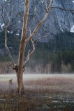 Ghost meadow
