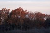 Oak dawn