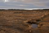 Salt Marsh on the Parker river