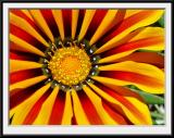Flower Macro Shots