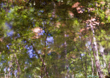 Impressionist Reflection