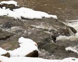 More Winter Water