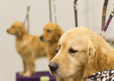 Another Dog Show Shot
