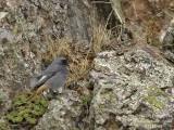 BIRDS OF MONFRAGUE PARK - THE SMALL BIRDS
