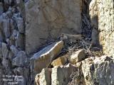 Birding in Extremadura and Monfragüe Park - March 2009