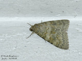 Noctuidae - Unknown moth