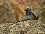 SMALL PASSERINES SEEN IN EXTREMADURA