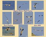 Flight Displays Egyptian Vultures